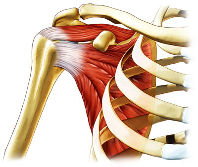 Naturopathic Continuing Education - Understanding the Rotator Cuff